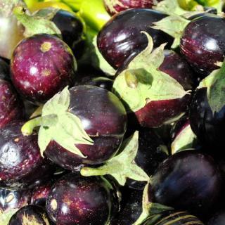 Auberginen rund, weiß/violett