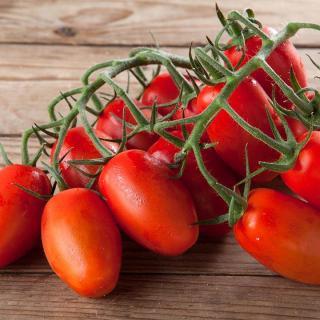 Tomaten Mini-Romastrauch
