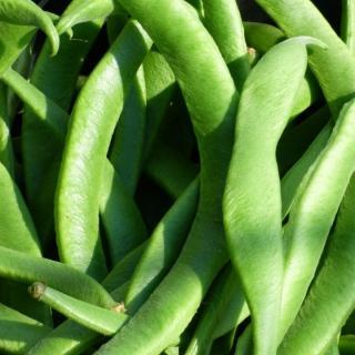 Bohnen Stangen grün