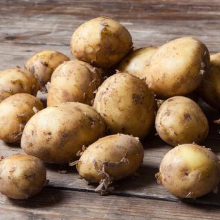 Kartoffel Cara fk gelbes Fleisch