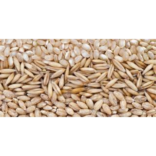 Getreide & Ölsaaten