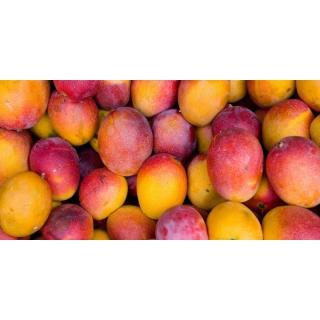 Südfrüchte & Exoten